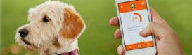 Collier GPS pour chien et chat